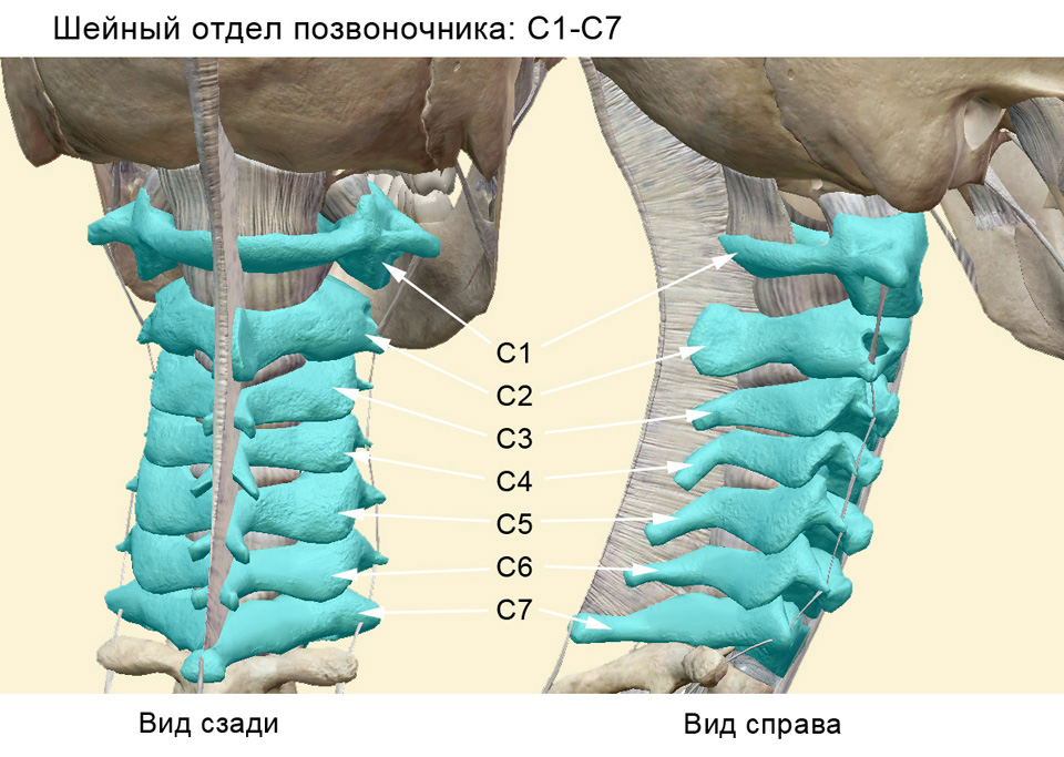 Неочевидные последствия шейного остеохондроза | КОСТОПРАВ Олесь ...