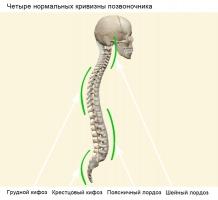 Normalnye-krivizny-pozvonochnika_web