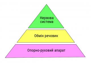 Піраміда організму
