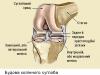Будова колінного суглоба
